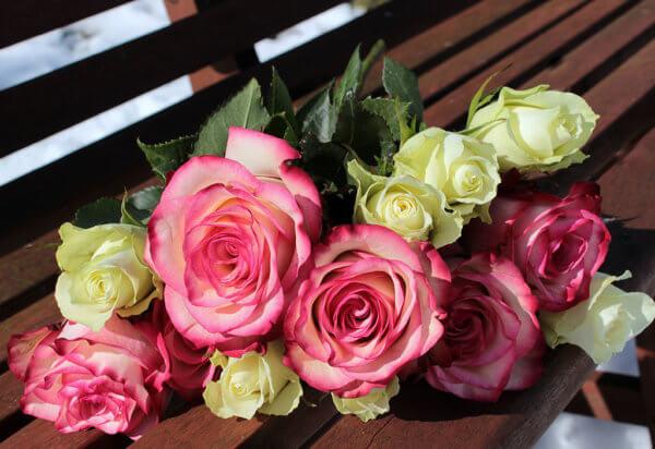 roses-1024x703